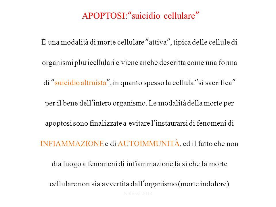 APOPTOSI: suicidio cellulare