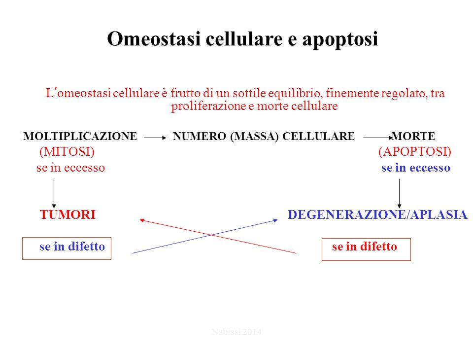 Omeostasi cellulare e apoptosi