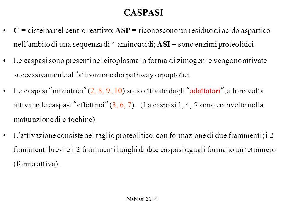 CASPASI