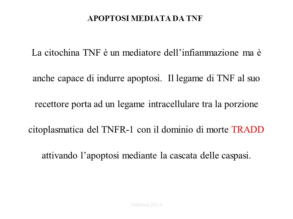 APOPTOSI MEDIATA DA TNF