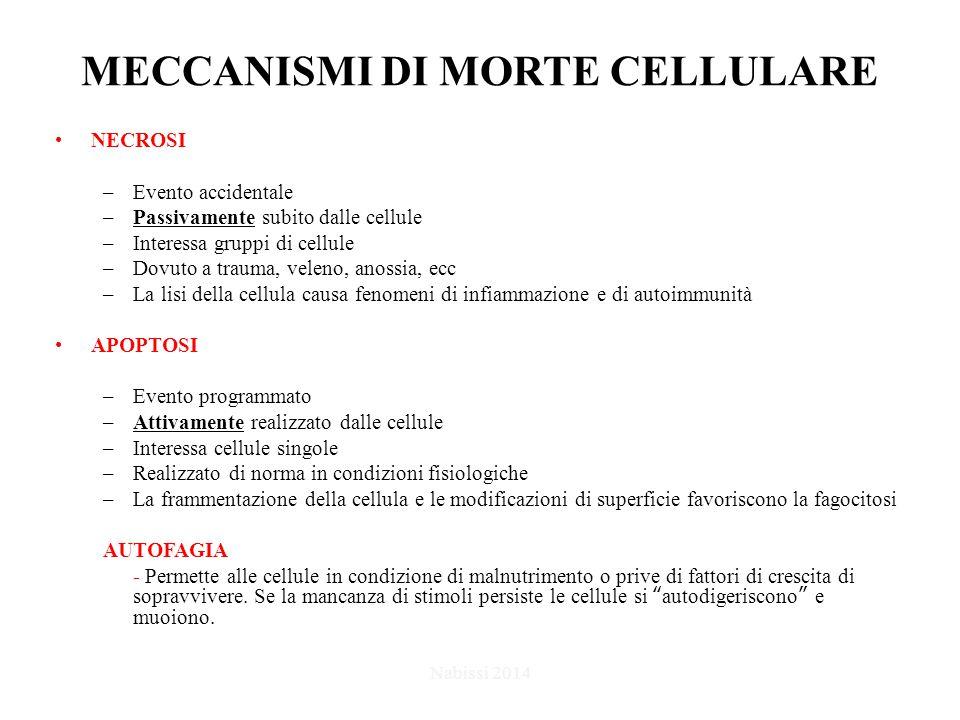 MECCANISMI DI MORTE CELLULARE