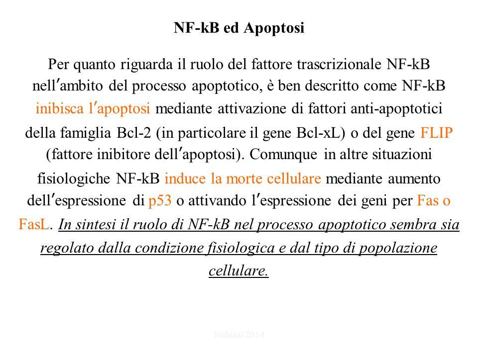 Per quanto riguarda il ruolo del fattore trascrizionale NF-kB