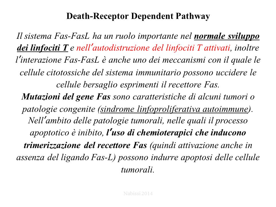 Death-Receptor Dependent Pathway