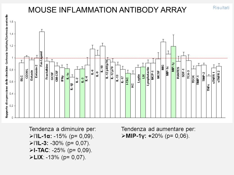 MOUSE INFLAMMATION ANTIBODY ARRAY