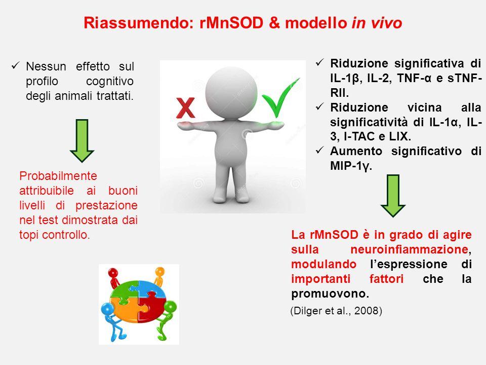 Riassumendo: rMnSOD & modello in vivo