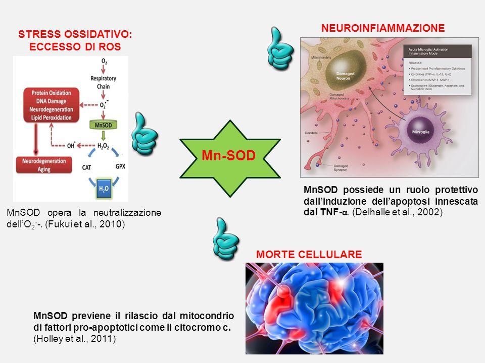 Mn-SOD NEUROINFIAMMAZIONE STRESS OSSIDATIVO: ECCESSO DI ROS