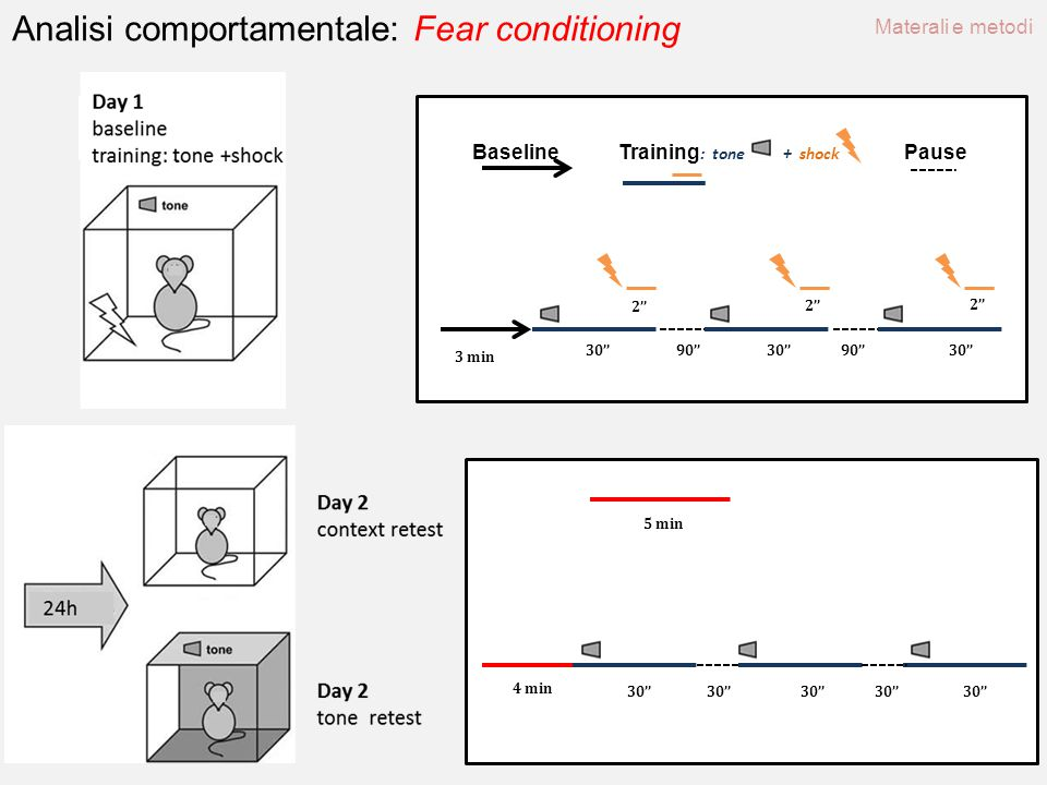 Analisi comportamentale: Fear conditioning