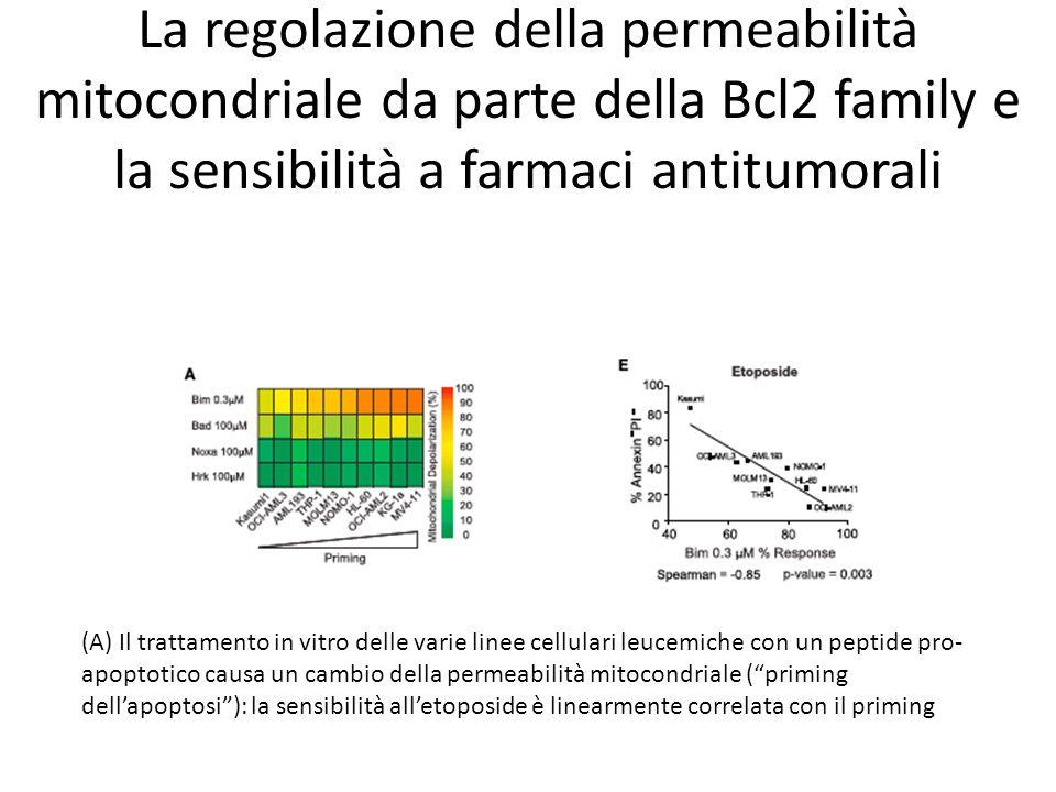 La regolazione della permeabilità mitocondriale da parte della Bcl2 family e la sensibilità a farmaci antitumorali