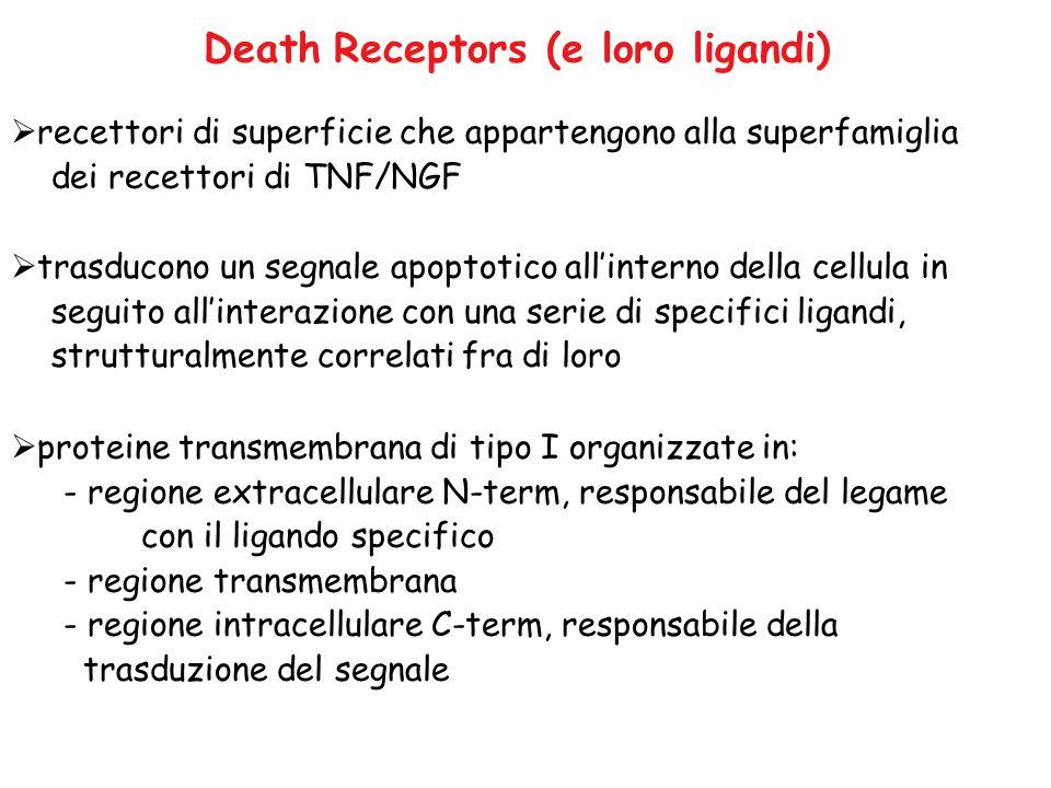 Death Receptors (e loro ligandi)