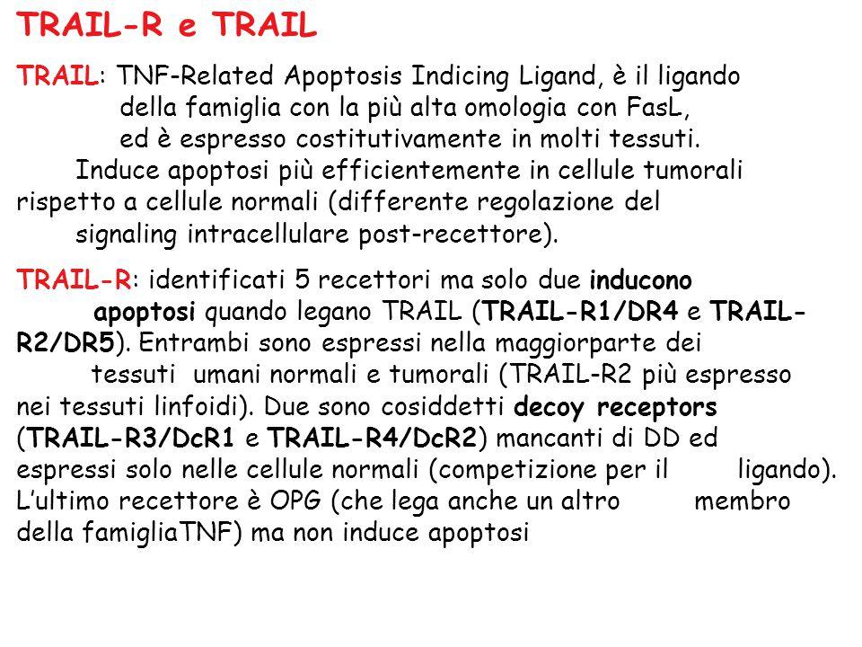 TRAIL-R e TRAIL TRAIL: TNF-Related Apoptosis Indicing Ligand, è il ligando. della famiglia con la più alta omologia con FasL,
