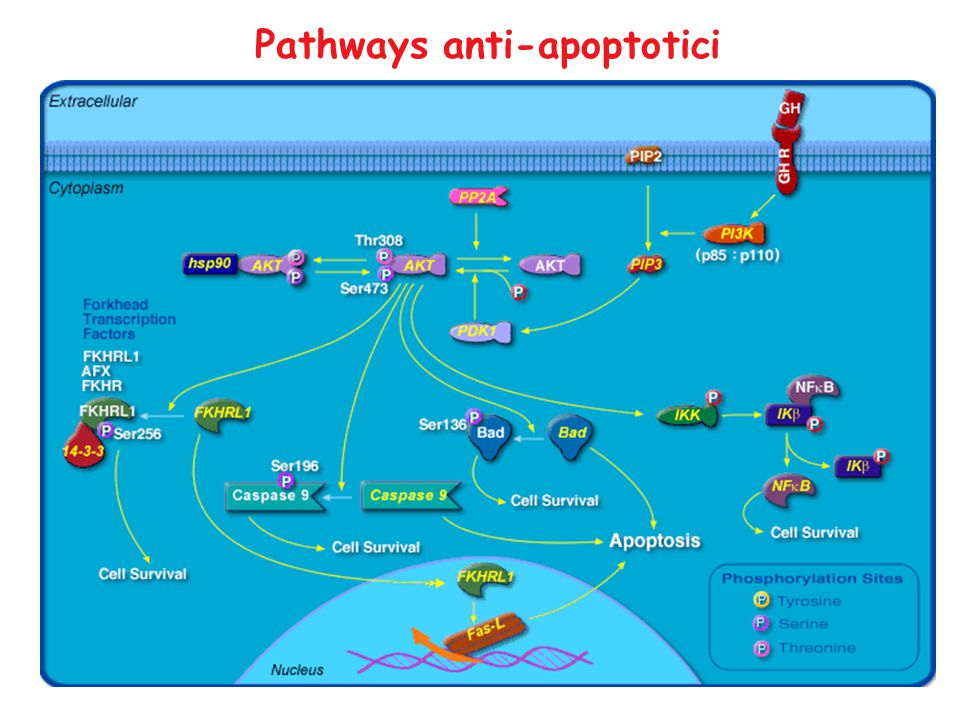 Pathways anti-apoptotici