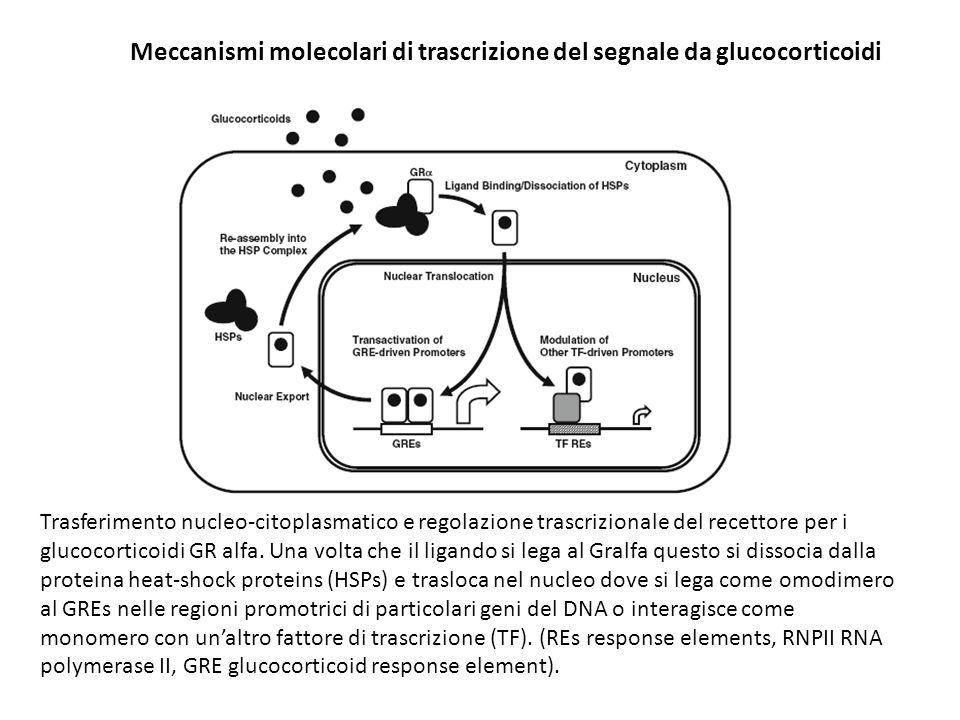 Meccanismi molecolari di trascrizione del segnale da glucocorticoidi