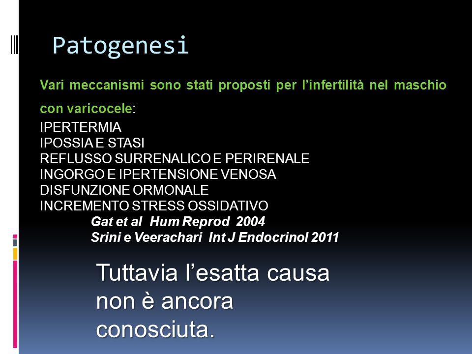 Patogenesi Tuttavia l'esatta causa non è ancora conosciuta.