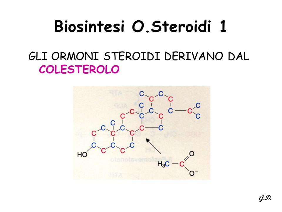 Biosintesi O.Steroidi 1 GLI ORMONI STEROIDI DERIVANO DAL COLESTEROLO