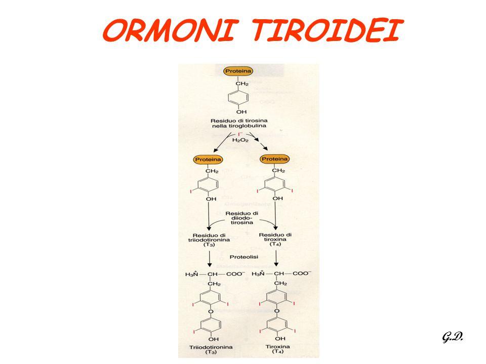 ORMONI TIROIDEI G.D.