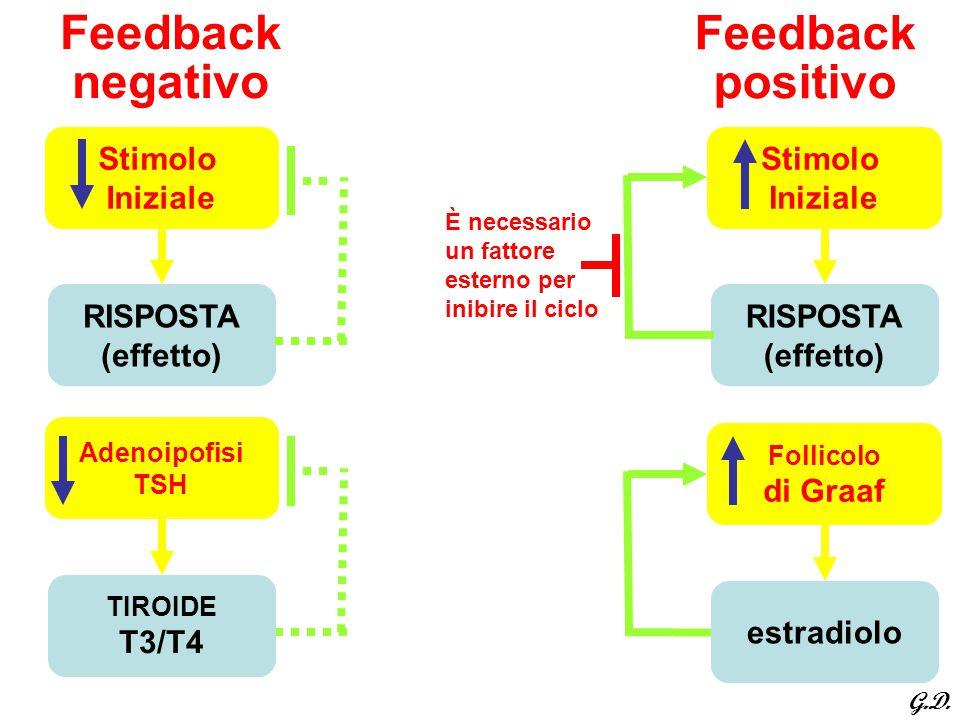 Feedback negativo Feedback positivo