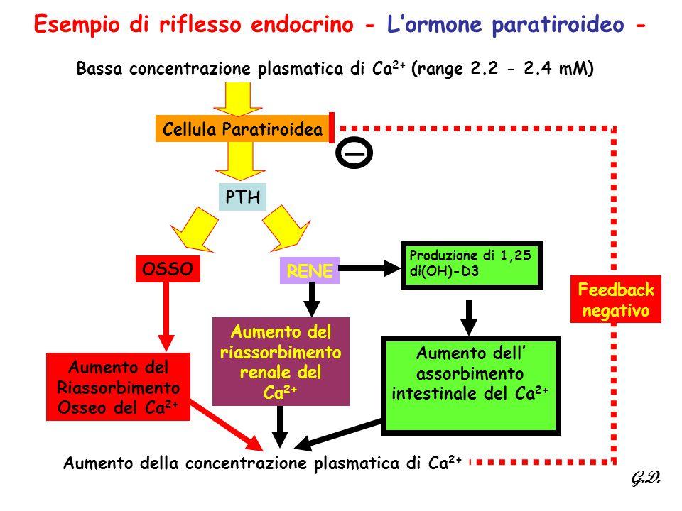 Esempio di riflesso endocrino - L'ormone paratiroideo -