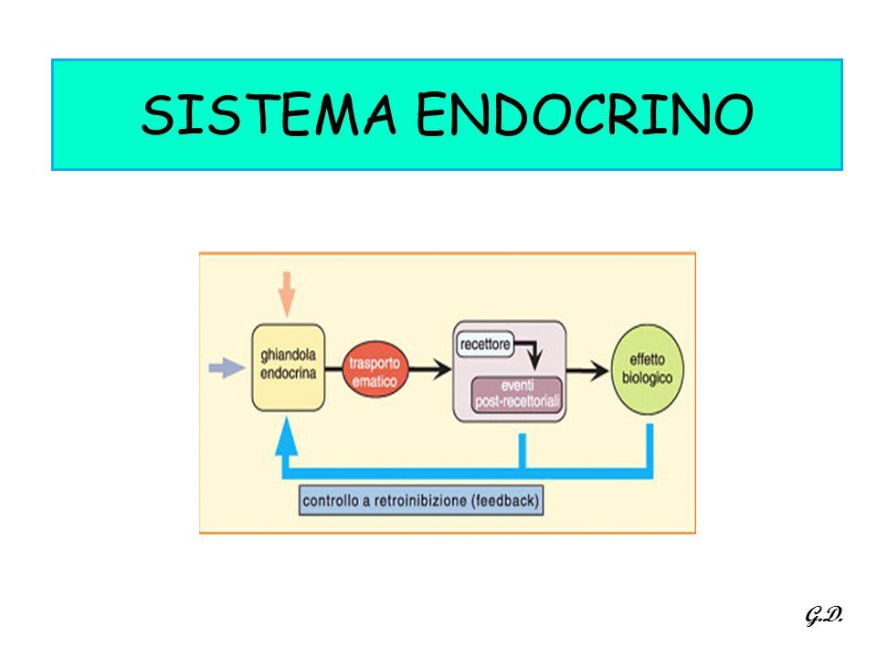 SISTEMA ENDOCRINO G.D.