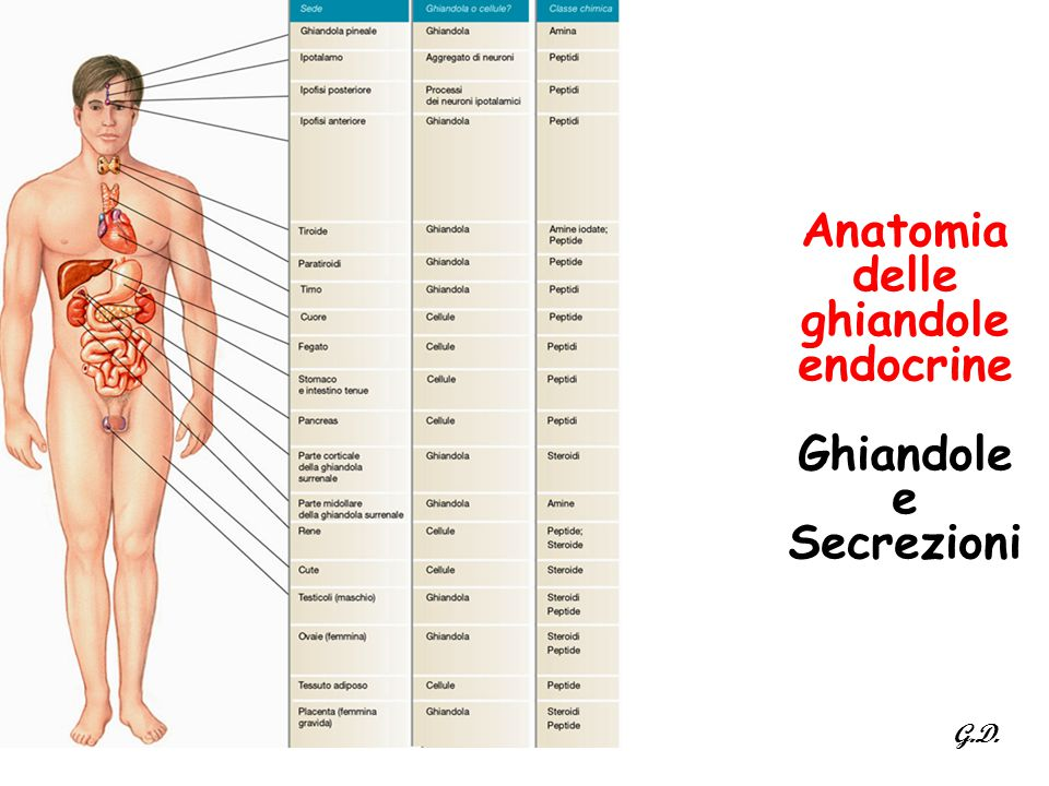 Anatomia delle ghiandole endocrine Ghiandole e Secrezioni