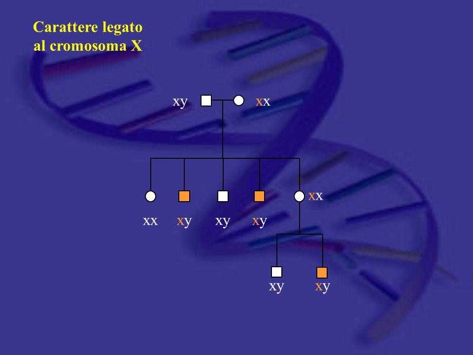 Carattere legato al cromosoma X xy xx xx xx xy xy xy xy xy