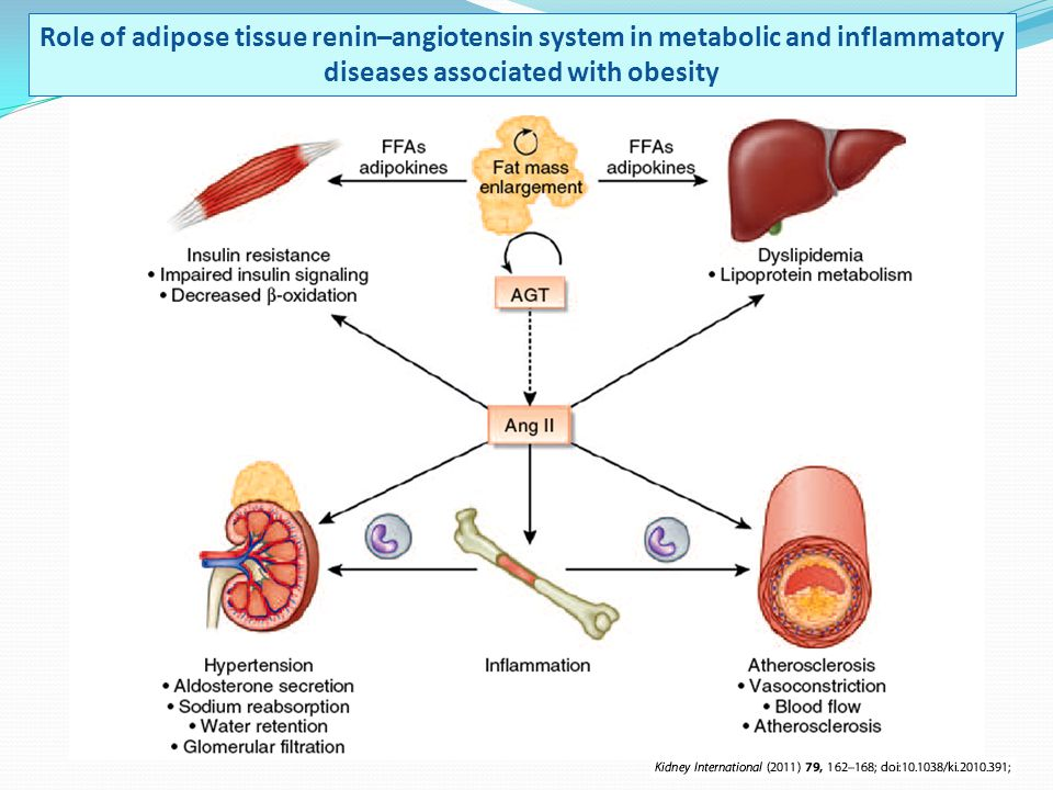 Role of adipose tissue renin–angiotensin system in metabolic and inflammatory diseases associated with obesity