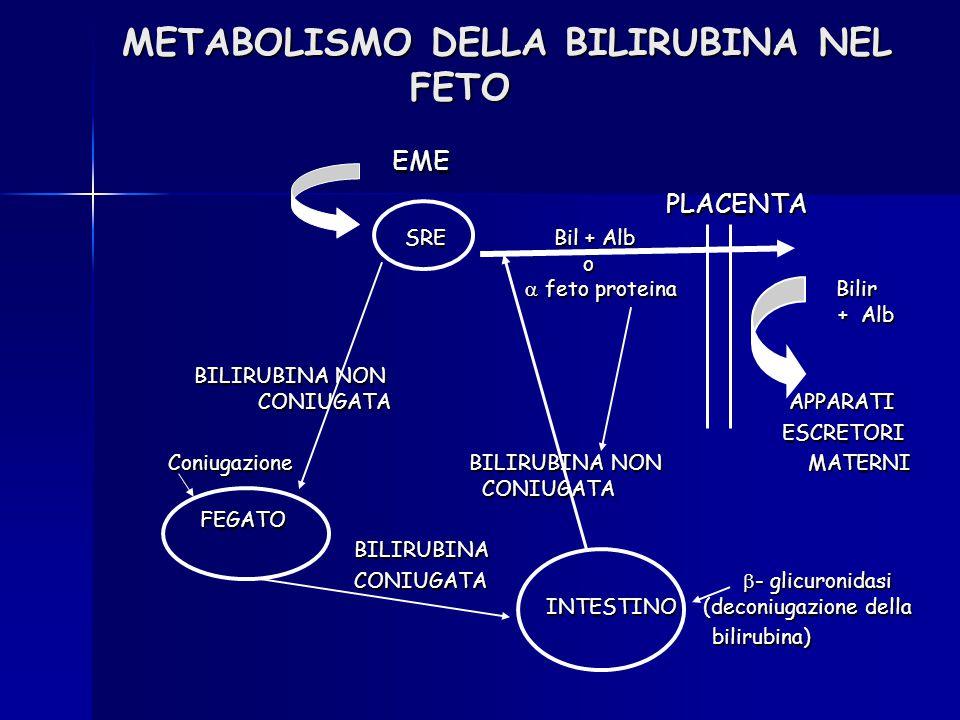 METABOLISMO DELLA BILIRUBINA NEL FETO