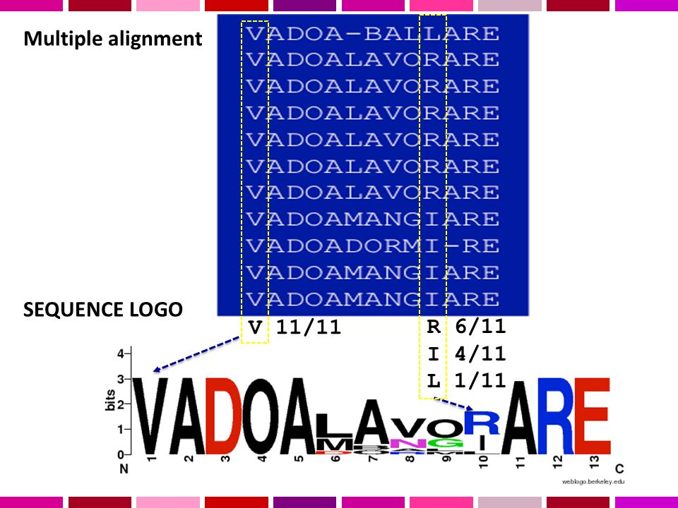 Multiple alignment SEQUENCE LOGO V 11/11 R 6/11 I 4/11 L 1/11