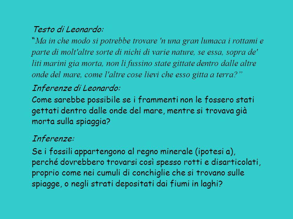 Testo di Leonardo: