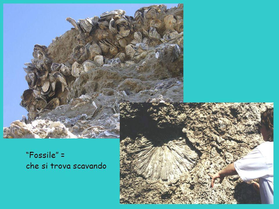 Fossile = che si trova scavando
