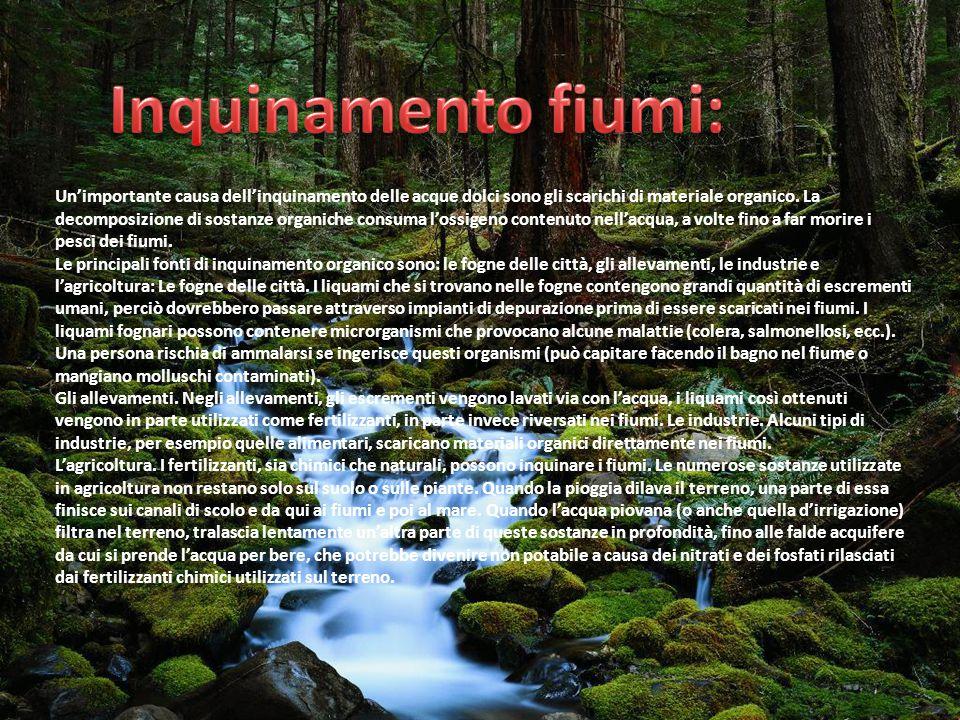Inquinamento fiumi:
