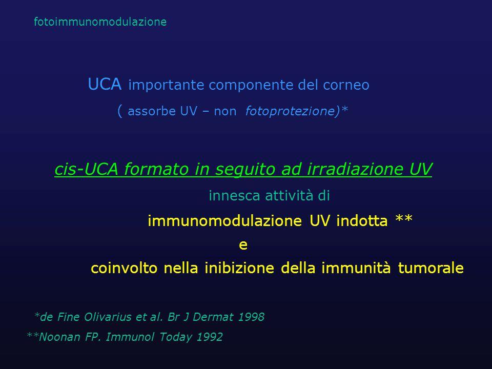 UCA importante componente del corneo
