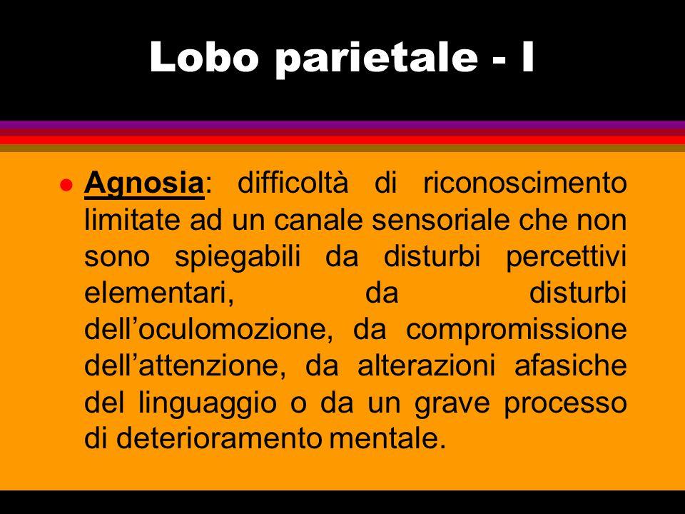 Lobo parietale - I