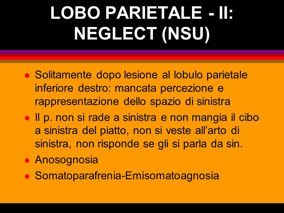 LOBO PARIETALE - II: NEGLECT (NSU)