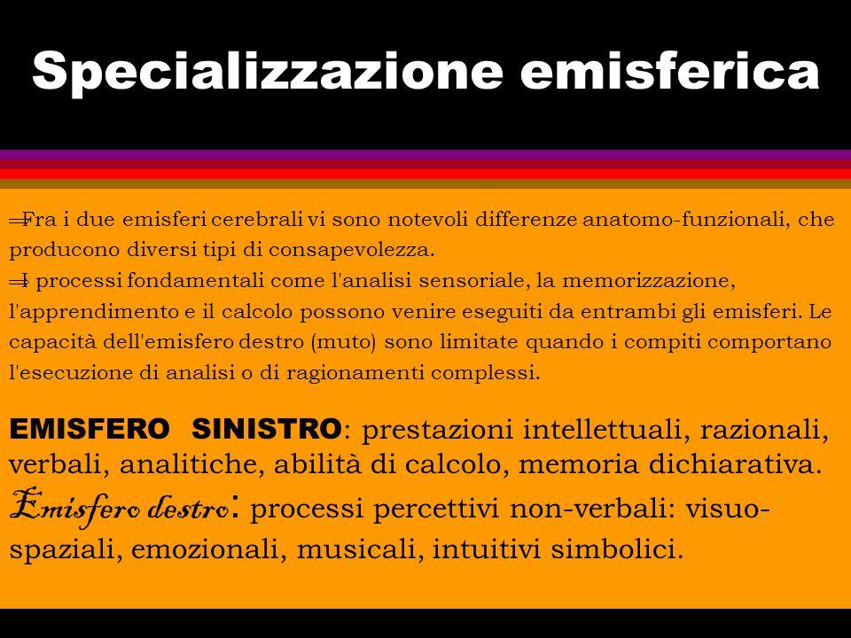 Specializzazione emisferica