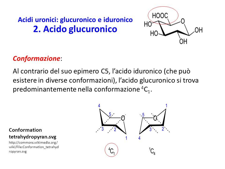 Acidi uronici: glucuronico e iduronico 2. Acido glucuronico
