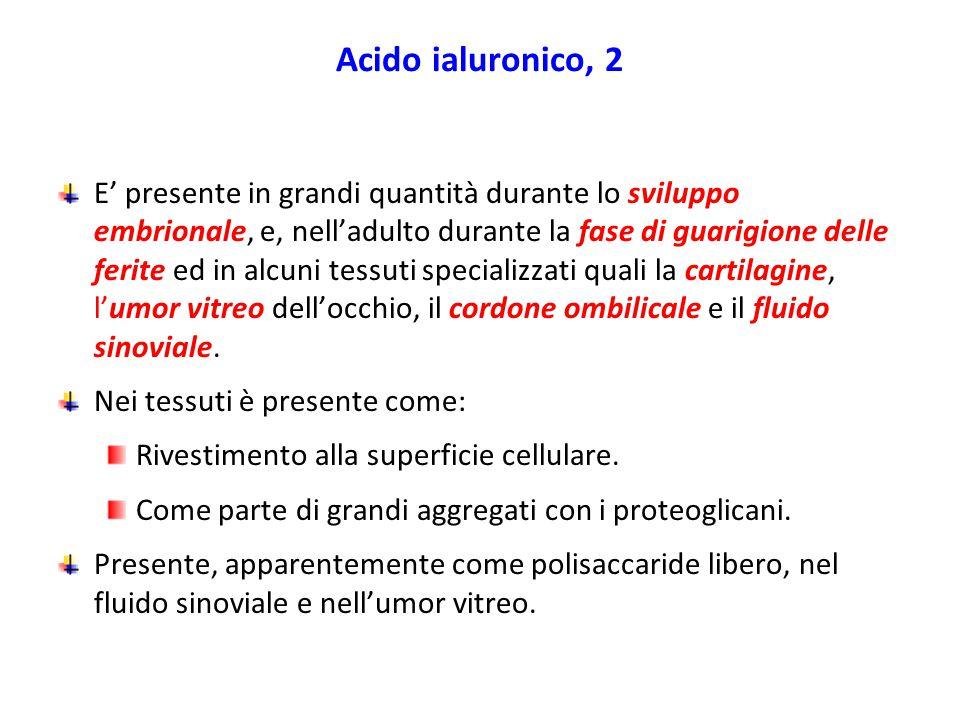 Acido ialuronico, 2