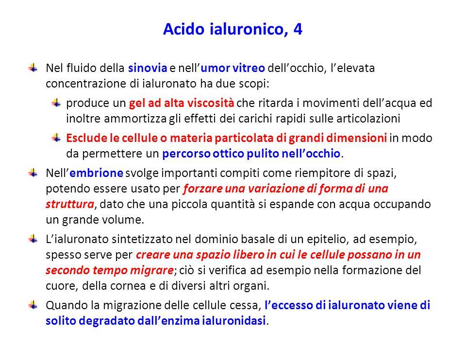 Acido ialuronico, 4 Nel fluido della sinovia e nell'umor vitreo dell'occhio, l'elevata concentrazione di ialuronato ha due scopi: