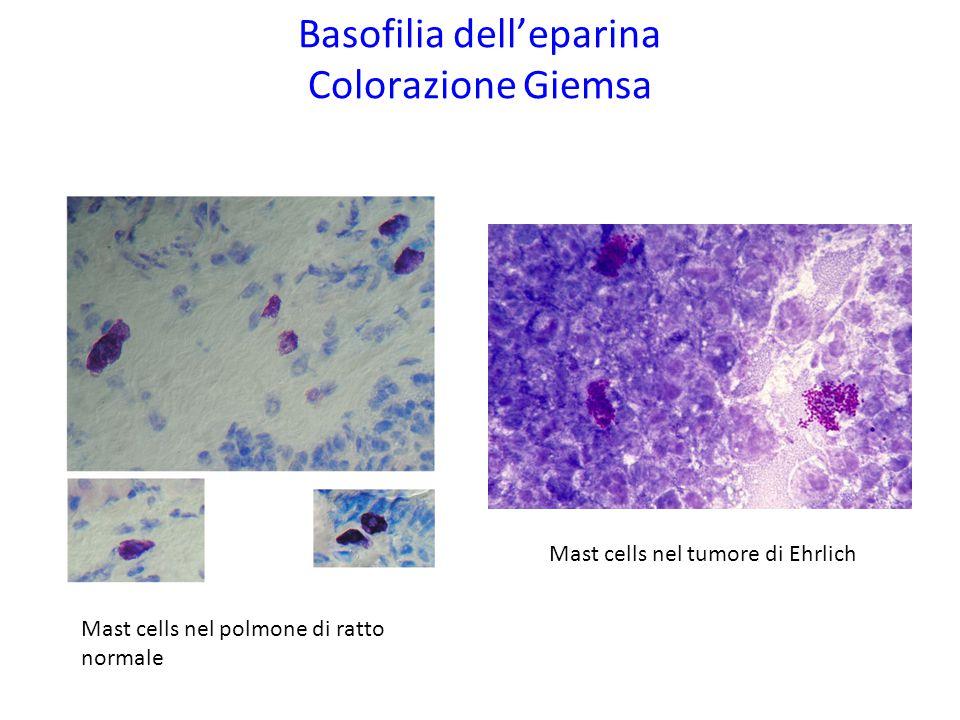 Basofilia dell'eparina Colorazione Giemsa