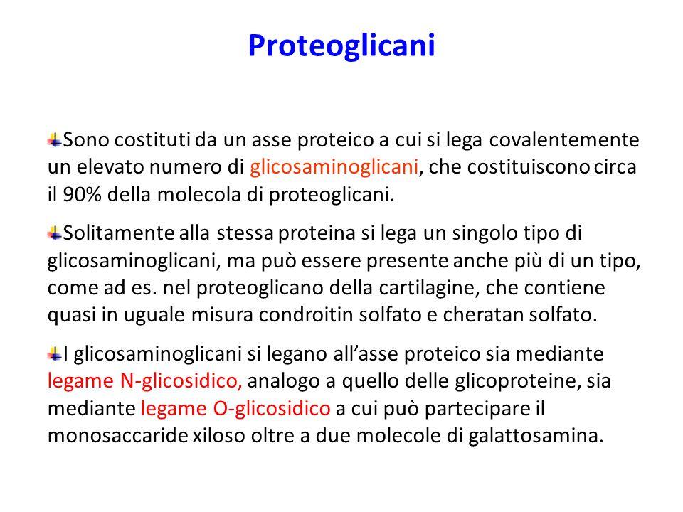 Proteoglicani