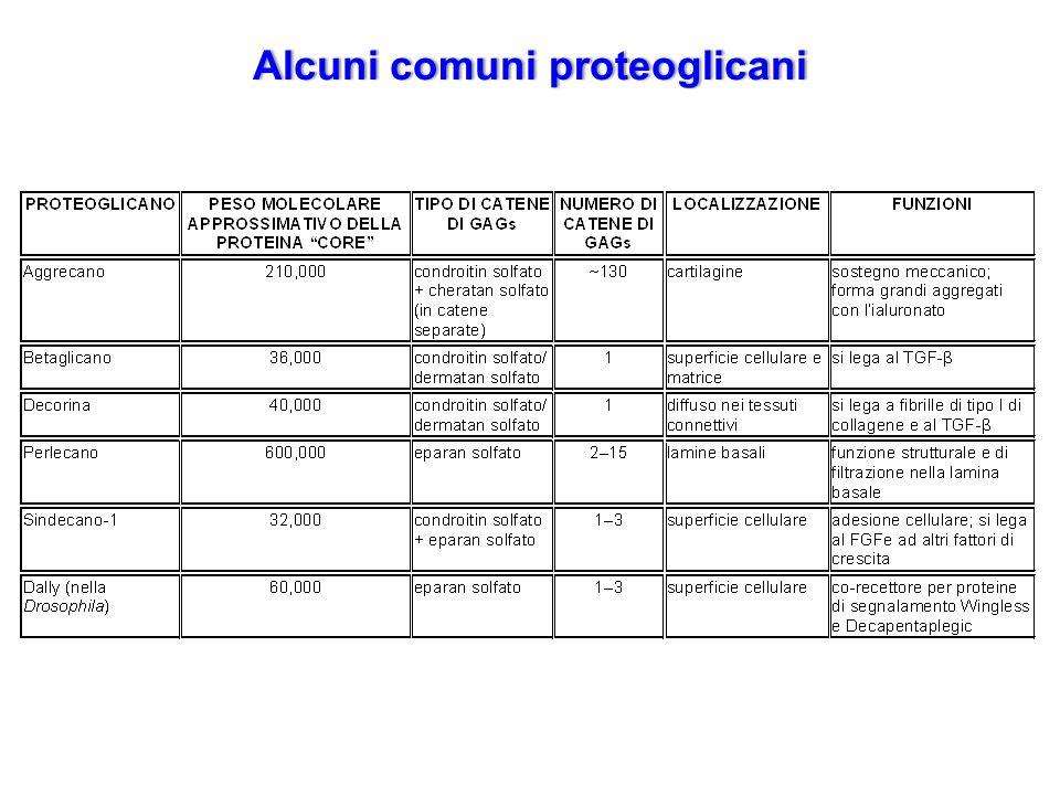 Alcuni comuni proteoglicani