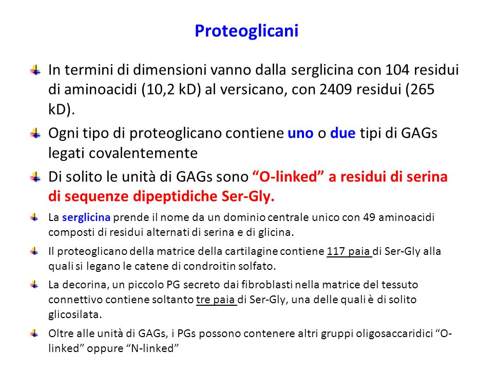 Proteoglicani In termini di dimensioni vanno dalla serglicina con 104 residui di aminoacidi (10,2 kD) al versicano, con 2409 residui (265 kD).