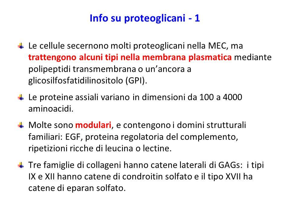 Info su proteoglicani - 1
