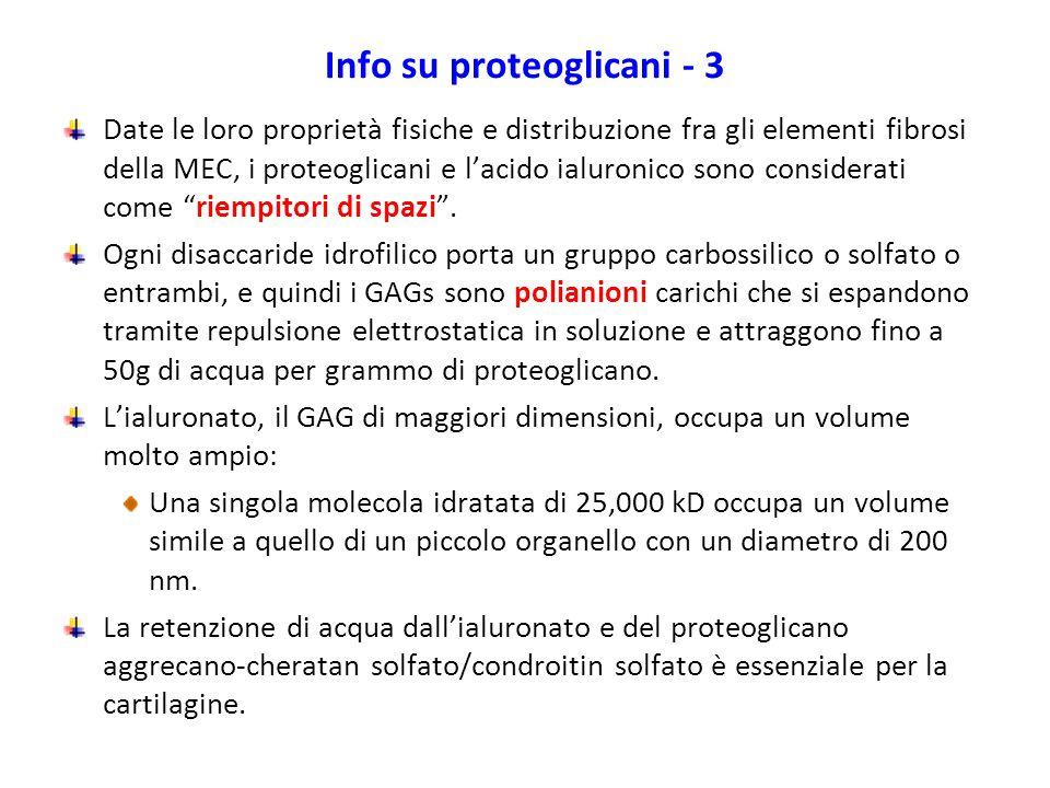 Info su proteoglicani - 3