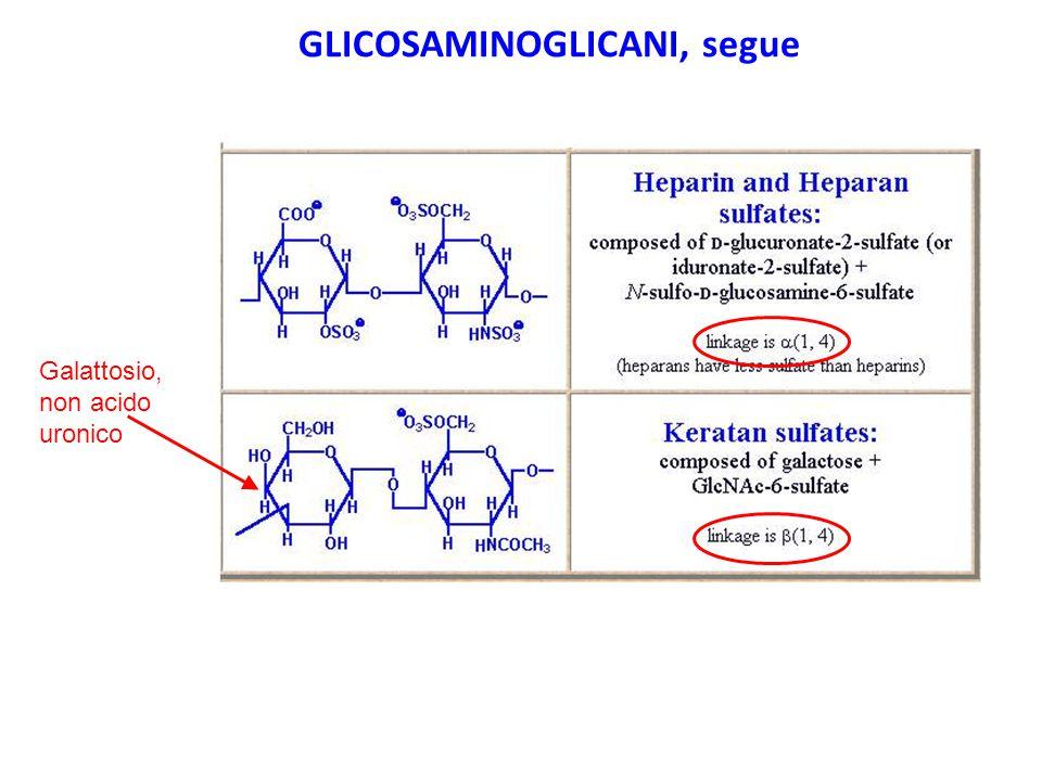 GLICOSAMINOGLICANI, segue