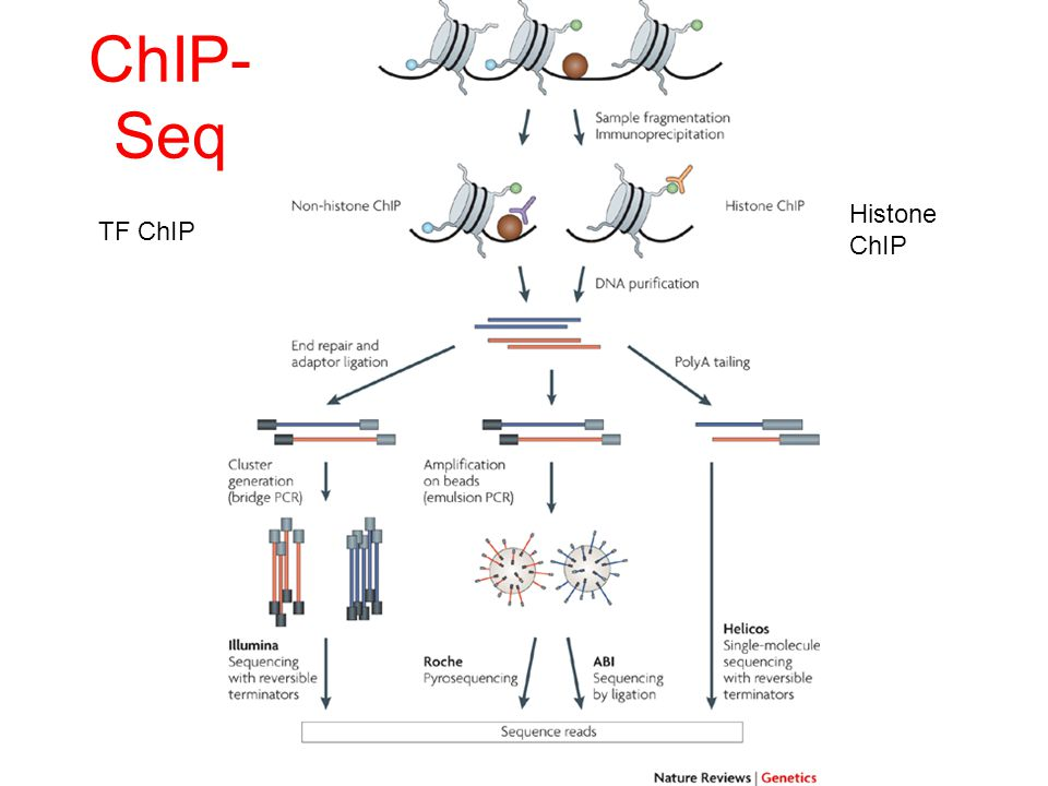 ChIP-Seq Histone ChIP TF ChIP