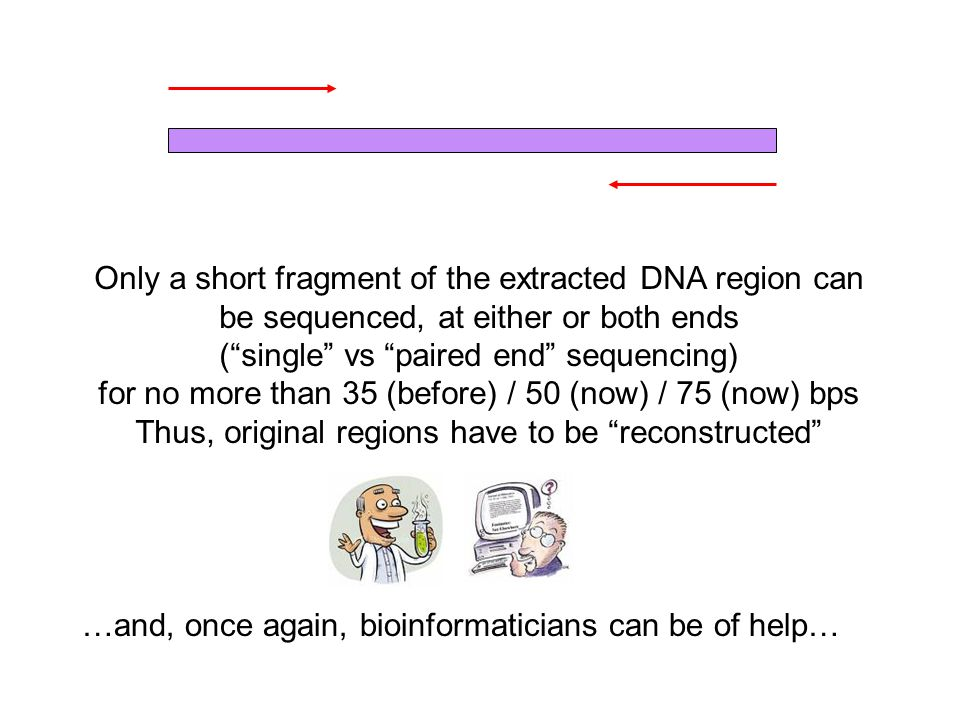 Only a short fragment of the extracted DNA region can