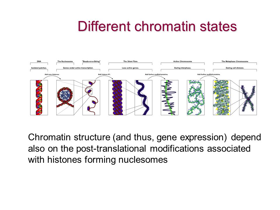 Different chromatin states