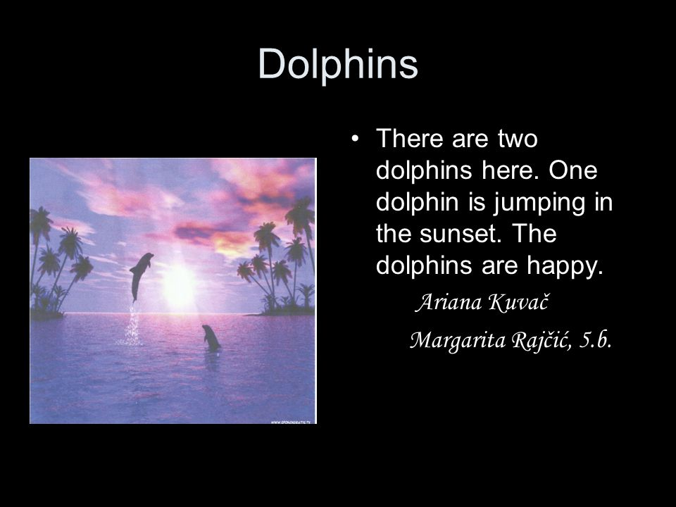 Dolphins There are two dolphins here. One dolphin is jumping in the sunset. The dolphins are happy.
