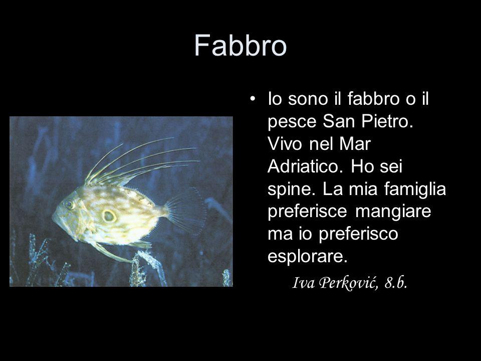 Fabbro Io sono il fabbro o il pesce San Pietro. Vivo nel Mar Adriatico. Ho sei spine. La mia famiglia preferisce mangiare ma io preferisco esplorare.