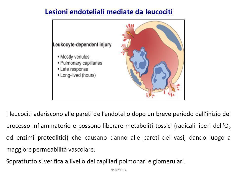 Lesioni endoteliali mediate da leucociti